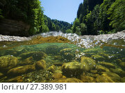 Купить «Split level view of the Sense river, Cantons of Fribourg and Bern, Switzerland, July. Photographed for the Freshwater Project.», фото № 27389981, снято 23 марта 2018 г. (c) Nature Picture Library / Фотобанк Лори