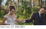 Купить «The bride and groom walking in a pine forest, holding hands and looking at each other. Air kiss. Happy together. Walk in the woods on your wedding day.», видеоролик № 27390901, снято 27 октября 2017 г. (c) Mikhail Davidovich / Фотобанк Лори