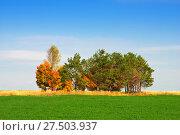 Островок деревьев в открытом поле (2014 год). Стоковое фото, фотограф Зобков Георгий / Фотобанк Лори