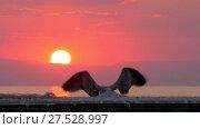 Купить «Gull flying away. Sea scene at sunset», видеоролик № 27528997, снято 19 марта 2019 г. (c) Данил Руденко / Фотобанк Лори