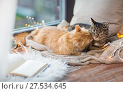 Купить «two cats lying on window sill with blanket at home», фото № 27534645, снято 15 ноября 2017 г. (c) Syda Productions / Фотобанк Лори