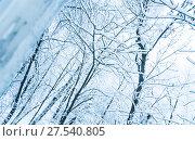 Купить «Заснеженные деревья. Вид из окна. Последствия сильного снегопада в Москве», фото № 27540805, снято 31 января 2018 г. (c) Алёшина Оксана / Фотобанк Лори