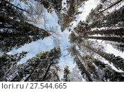 Купить «Кроны заснеженных деревьев на фоне голубого неба», фото № 27544665, снято 1 февраля 2018 г. (c) Яковлев Сергей / Фотобанк Лори