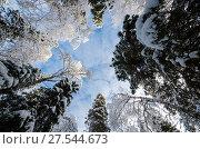 Купить «Кроны заснеженных деревьев на фоне голубого неба», фото № 27544673, снято 1 февраля 2018 г. (c) Яковлев Сергей / Фотобанк Лори