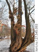 Инсталляция на дереве в Аптекарском огороде. Москва (2017 год). Редакционное фото, фотограф Инесса Гаварс / Фотобанк Лори