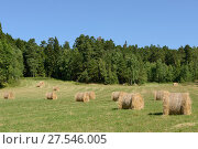 Купить «Harvesting. Fields and bales of hay in autumn. Aland Islands, Finland», фото № 27546005, снято 21 июля 2013 г. (c) Валерия Попова / Фотобанк Лори