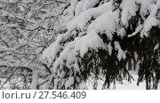 Купить «branch of a Christmas tree in the snow in forest», видеоролик № 27546409, снято 31 января 2018 г. (c) Володина Ольга / Фотобанк Лори