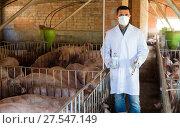 Купить «Male veterinarian at pig farm», фото № 27547149, снято 21 октября 2018 г. (c) Яков Филимонов / Фотобанк Лори