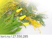 Spring flowers for Mother day. Стоковое фото, фотограф ElenArt / Фотобанк Лори