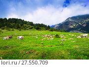 Купить «Summer view of highland meadow with cows», фото № 27550709, снято 19 января 2019 г. (c) Яков Филимонов / Фотобанк Лори