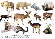 Купить «asia animals isolated», фото № 27550737, снято 20 марта 2019 г. (c) Яков Филимонов / Фотобанк Лори