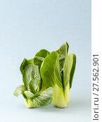 Купить «Ripe young cabbage Pak-choi (salad) on a light blue background.», фото № 27562901, снято 4 февраля 2018 г. (c) Olesya Tseytlin / Фотобанк Лори