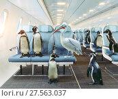Купить «penguins and pelican in the airplane cabin.», фото № 27563037, снято 10 декабря 2018 г. (c) Виктор Застольский / Фотобанк Лори