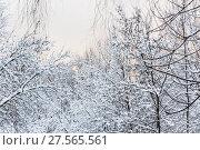 Купить «Деревья в снегу. Москва», фото № 27565561, снято 31 января 2018 г. (c) Алёшина Оксана / Фотобанк Лори