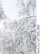 Купить «Деревья в снегу после снегопада в России», фото № 27565589, снято 31 января 2018 г. (c) Алёшина Оксана / Фотобанк Лори