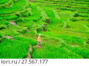 Купить «Farmer wearing a conical hat in rice paddy terraces, Mai Chau, Hoa Binh, Vietnam, Indochina, Southeast Asia, Asia», фото № 27567177, снято 9 сентября 2017 г. (c) age Fotostock / Фотобанк Лори