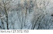 Купить «Aerial view of winter forest with snow and frost», видеоролик № 27572153, снято 12 декабря 2017 г. (c) Михаил Коханчиков / Фотобанк Лори