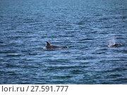 Купить «delfin in scotland», фото № 27591777, снято 20 июня 2019 г. (c) PantherMedia / Фотобанк Лори