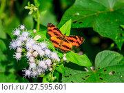 Купить «Beautiful Butterfly in forest», фото № 27595601, снято 22 марта 2019 г. (c) PantherMedia / Фотобанк Лори