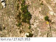 Купить «Moss and lichen on the bark», фото № 27621953, снято 20 февраля 2018 г. (c) PantherMedia / Фотобанк Лори