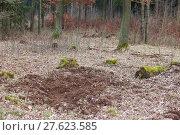 Купить «tree haze snag resin beech», фото № 27623585, снято 22 мая 2019 г. (c) PantherMedia / Фотобанк Лори