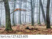 Купить «tree haze snag resin beech», фото № 27623605, снято 22 мая 2019 г. (c) PantherMedia / Фотобанк Лори