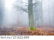 Купить «tree haze snag resin beech», фото № 27623609, снято 22 мая 2019 г. (c) PantherMedia / Фотобанк Лори