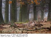 Купить «tree haze snag resin beech», фото № 27623613, снято 22 мая 2019 г. (c) PantherMedia / Фотобанк Лори