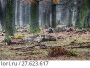 Купить «tree haze snag resin beech», фото № 27623617, снято 22 мая 2019 г. (c) PantherMedia / Фотобанк Лори