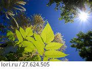 Купить «counter light blauer himmel grüne», фото № 27624505, снято 19 октября 2019 г. (c) PantherMedia / Фотобанк Лори