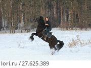Купить «Young woman rids on black horse in snowy countryside - the steed stands on its hind legs», фото № 27625389, снято 7 февраля 2018 г. (c) Константин Шишкин / Фотобанк Лори