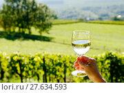 Купить «glass of white wine exposed towards the sun, vineyard on background», фото № 27634593, снято 23 октября 2018 г. (c) PantherMedia / Фотобанк Лори