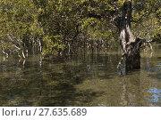 Купить «mangrove forest in australia», фото № 27635689, снято 22 июля 2019 г. (c) PantherMedia / Фотобанк Лори