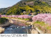 Купить «Sakura flower in Japan», фото № 27636405, снято 21 февраля 2019 г. (c) PantherMedia / Фотобанк Лори