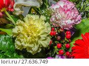 Купить «nature colour plant flower season», фото № 27636749, снято 15 июля 2018 г. (c) PantherMedia / Фотобанк Лори