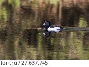 Купить «nature water day outside wildlife», фото № 27637745, снято 19 октября 2018 г. (c) PantherMedia / Фотобанк Лори