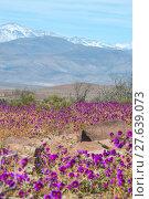 Купить «Flowering desert (Spanish», фото № 27639073, снято 19 сентября 2019 г. (c) PantherMedia / Фотобанк Лори