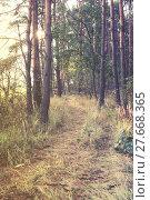 vintage forest background. Стоковое фото, фотограф Tomasz Trybus / PantherMedia / Фотобанк Лори