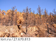 Купить «Effects of the Fire in a Forest», фото № 27670813, снято 27 марта 2019 г. (c) PantherMedia / Фотобанк Лори