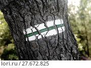 Купить «Tagging hiking», фото № 27672825, снято 19 декабря 2018 г. (c) PantherMedia / Фотобанк Лори