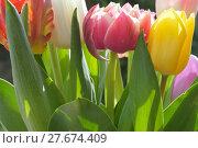 Купить «nature plant flower spring garden», фото № 27674409, снято 21 марта 2019 г. (c) PantherMedia / Фотобанк Лори
