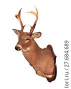 Купить «Deer head taxidermy mounted on wall isolated in white background.», фото № 27684689, снято 22 мая 2018 г. (c) PantherMedia / Фотобанк Лори
