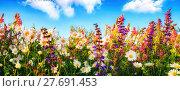 Купить «dense growing flowers on a meadow and blue sky», фото № 27691453, снято 22 июля 2019 г. (c) PantherMedia / Фотобанк Лори