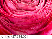 Купить «buttercup flower detail», фото № 27694061, снято 20 марта 2019 г. (c) PantherMedia / Фотобанк Лори