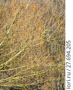 Купить «full frame twig background», фото № 27694205, снято 18 февраля 2020 г. (c) PantherMedia / Фотобанк Лори