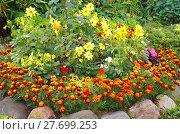 Купить «Садовые цветы на клумбе», эксклюзивное фото № 27699253, снято 19 августа 2017 г. (c) Елена Коромыслова / Фотобанк Лори
