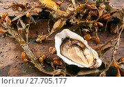 Купить «Single opened raw fresh oyster with marine kelp», фото № 27705177, снято 19 февраля 2018 г. (c) PantherMedia / Фотобанк Лори