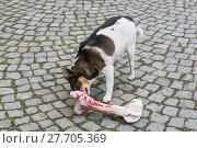Купить «animal skin dog engulf devour», фото № 27705369, снято 17 июля 2019 г. (c) PantherMedia / Фотобанк Лори
