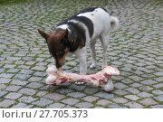 Купить «animal skin dog engulf devour», фото № 27705373, снято 17 июля 2019 г. (c) PantherMedia / Фотобанк Лори