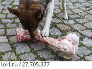 Купить «animal skin dog engulf devour», фото № 27705377, снято 17 июля 2019 г. (c) PantherMedia / Фотобанк Лори